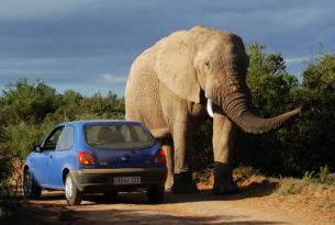 Sudáfrica al completo con elparque Kruger a tu aire en coche de alquiler