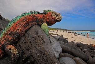 Ecuador en coche de alquiler + crucero por las Galápagos