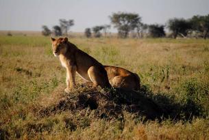 Safari Tanzania puestas de sol