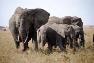 Safari Tanzania adorable