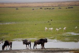 Safari Manyara y Taranguire en Lodge