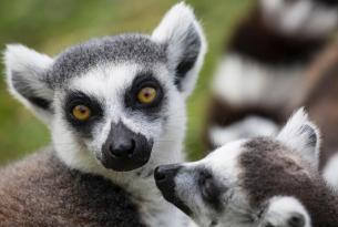 Madagascar: pura fascinación