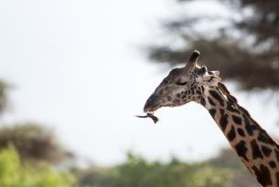 Kenia: un atardecer africano