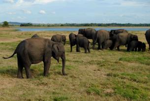 Sri Lanka: Sonidos de Mineriya  y Wilpattu con guía privado