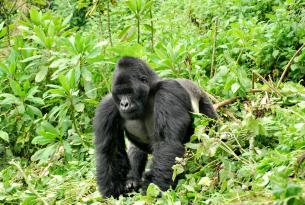 Uganda: De Murchison a Kampala en GRUPO
