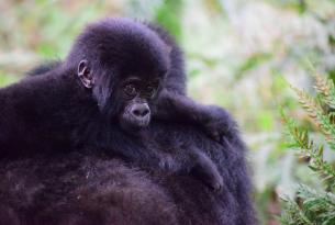La selva de Bwindi en Uganda