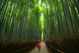 Cerezos en Flor de Japón a tu aire