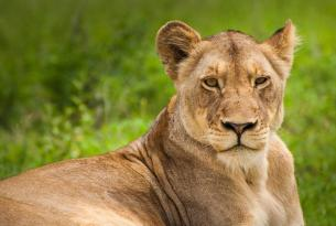Safari Sudáfrica con Kruger a tu aire