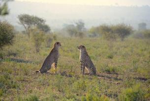 Safari Sudáfrica con Addo Elephant a tu aire
