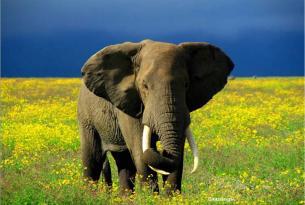 Memorias de África Clásico Especial Fin de Año