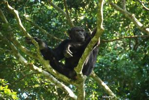 Gorila Trek Aventura