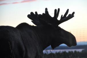 Aventura al completo en Tierra de los Sami, Laponia (Circuito en grupo)