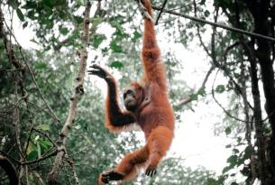 Kuala Lumpur y Borneo Mistico