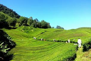 Malasia Espectacular (viaje en grupo)