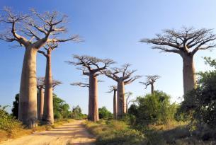 Madagascar: Expedición al Oeste