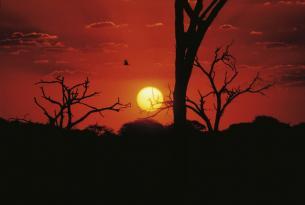 Safari de 3 ríos en el sur africano: Ríos Zambeze, Chobe y Okavango