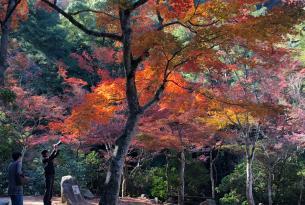 Japón: vive un otoño mágico en grupo reducido