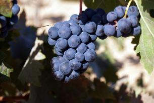 Sicilia: exquisita experiencia vinícola