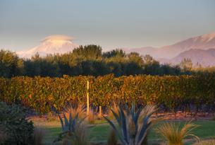 Quebradas y viñedos argentinos