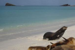 Ecuador -  Islas Galápagos en el yate Floreana -