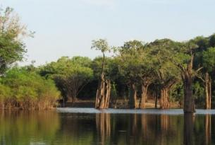 Brasil -  Expedición a la Amazonía por el río Apuaú. Guiada por A. Cánovas, biólogo - Salidas 1 SEP, 5 NOV , 14 ENE