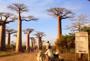 Madagascar -  Sur de Madagascar - Especial Semana Santa