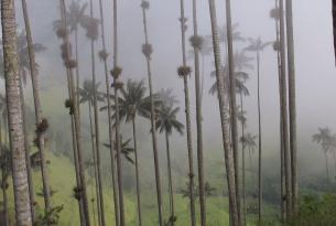 Colombia -  Andes, Café, Caribe y Desierto de la Guajira  - Salidas de Julio a Septiembre