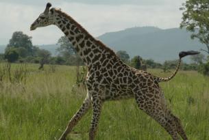 Tanzania -  Los Tesoros del Sur - Salida 8 de abril