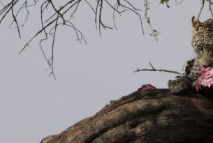 Kenya -  Ruta especial Migración - Safari con opción campamento o lodges. Salidas 9,16, 24/Ago y 8 septiembre