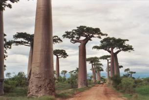 El Oeste Salvaje de Madagascar