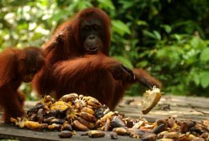 12 días por Indonesia con Borneo, Bali y Komodo