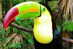 Costa Rica: dos océanos (disponible también en 4x4 a tu aire)