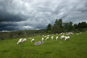 Escocia e Irlanda a tu aire en coche de alquiler: un combinado inigualable