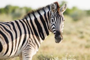 Safari móvil norte de Botswana