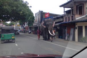 Sri Lanka: lo esencial en una semana