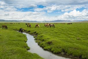 Un viaje inolvidable por Mongolia en grupo