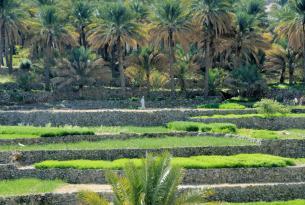 Oman, el país del incienso. Salida en octubre para mujeres viajeras.