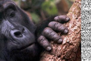 Uganda: 6 días de trekking safari en busca de los primates