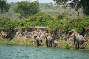 Uganda: gorilas en Bwindi y el Parque Nacional Queen Elizabeth