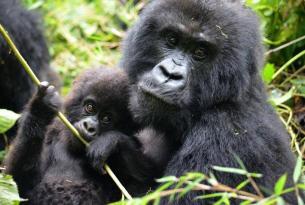 Gorilas y aventura de lujo en Uganda
