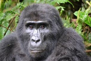 Uganda y Rwanda: Safari en grupo