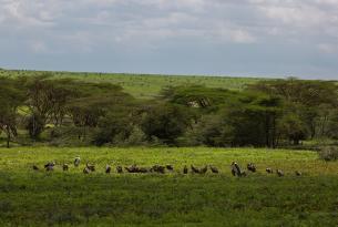 Classic Safari: Migraciones y etnias de Tanzania