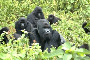 Aventura genuina en busca de los Gorilas en la Niebla de Uganda
