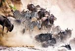 El Sueño de África: safari de lujo en grupo Premium