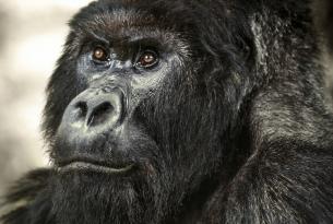 Uganda y Ruanda: Gorilas, Rinocerontes, trekkings, rafting y más
