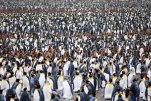 Antártida: Georgia del Sur, la Epopeya de Sir Ernest Shackleton