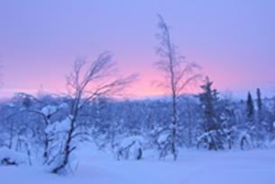 Laponia. La ruta del oso