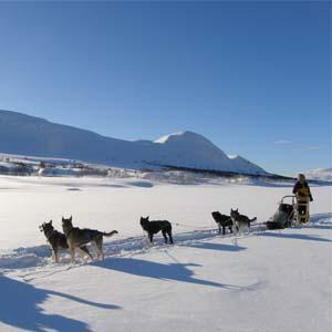 Noruega: Escapadas en Trineo de Perros