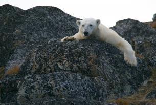 Kayak y glaciares en Svalbard