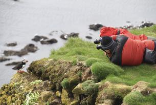 Islandia: el paraíso de las aves (observa frailecillos, álcidos, charranes y más)